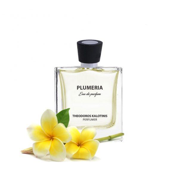 plumeria4